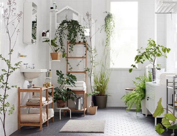 5 растений для ванной комнаты (фото 1)