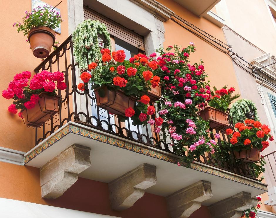 5 лучших растений для выращивания на балконе (фото 4)
