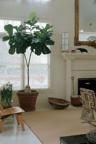 напольные цветы для дома фото