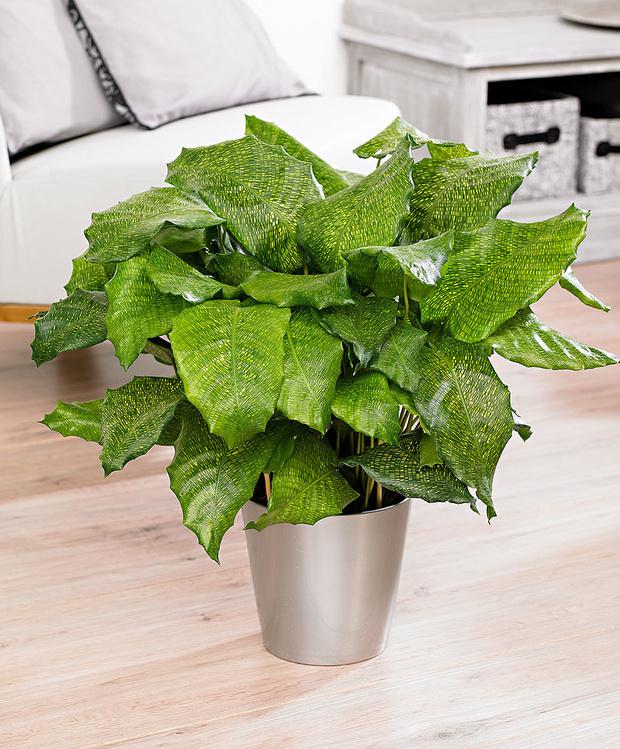 Самые модные комнатные растения этой осени (фото 12)