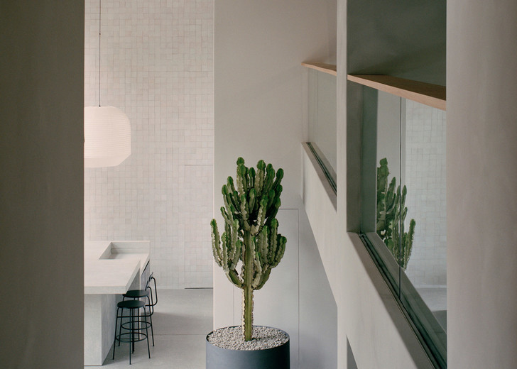 Бетон, ковры и кактусы: новый шоурум Armadillo & Co в Сиднее (фото 2)