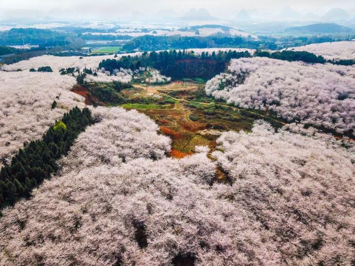 Цветение вишни в Китае: уникальные кадры (фото 2)
