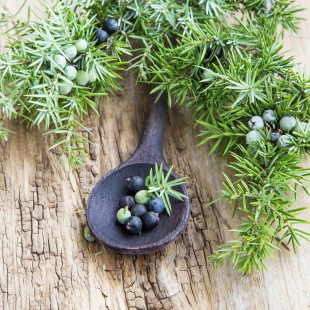 Травяной гороскоп: лечебные травы и знаки Зодиака (фото 12)