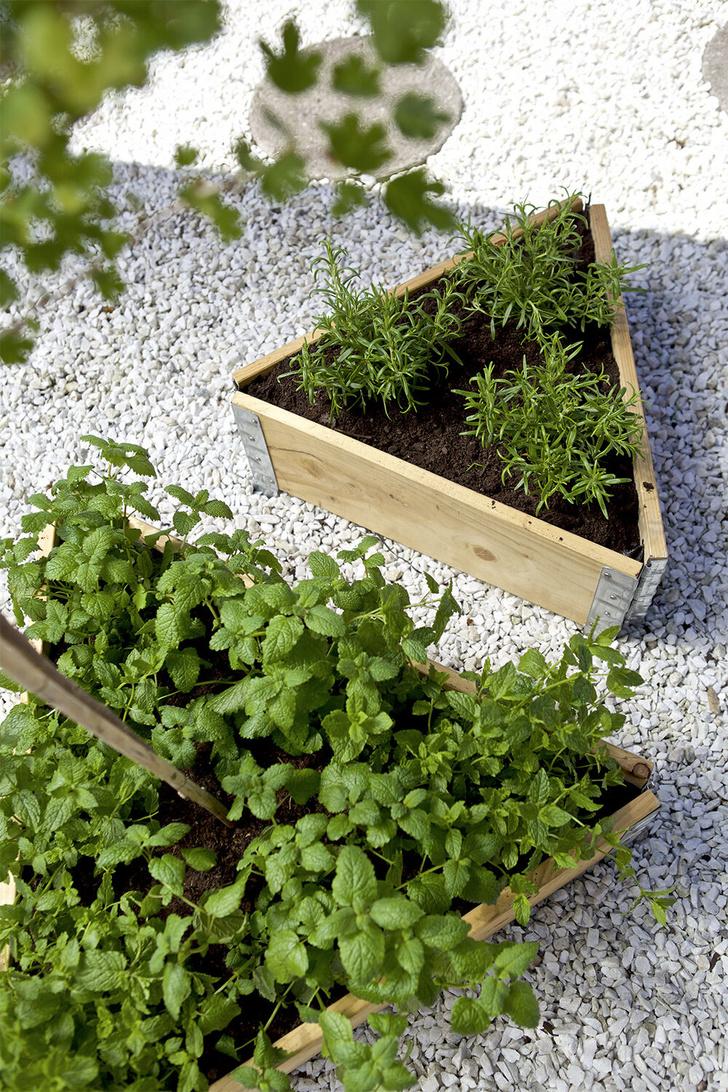Клумба в ящике: полезные советы для дачи и балкона (фото 3)