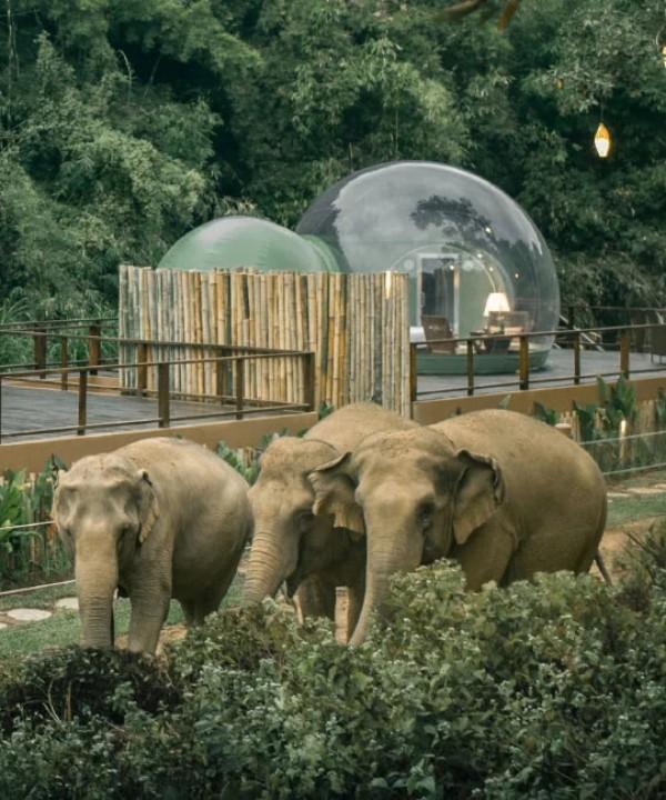 """Отель-""""пузырь"""" в джунглях Таиланда"""