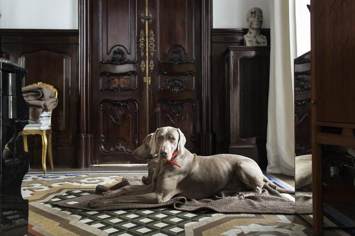 Известные дизайнеры и их собаки (фото 40)