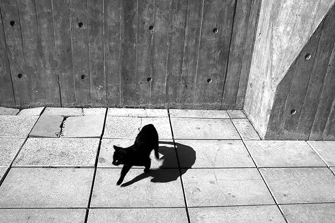 Черный кот на дороге