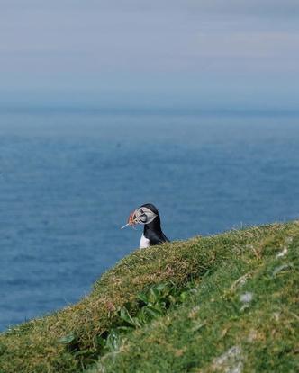 И целого мира мало: что делать в одиночестве на Фарерских островах? (фото 4.2)