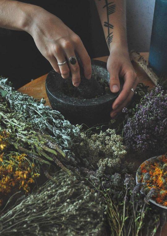 Как выбрать правильный чай для здоровья и настроения (фото 7)
