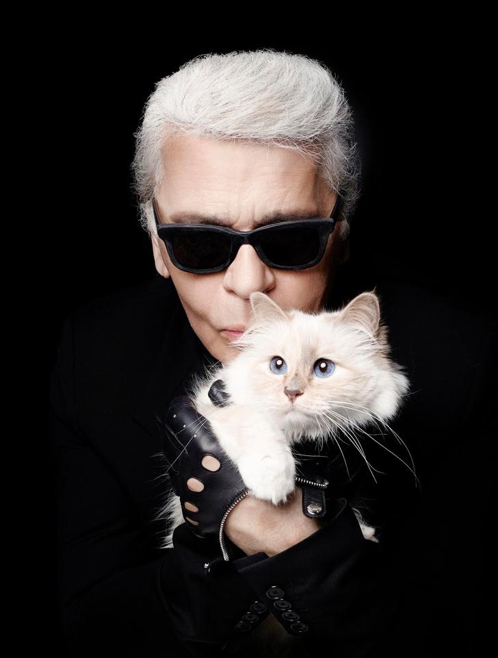 Кошка Карла Лагерфельда: фото