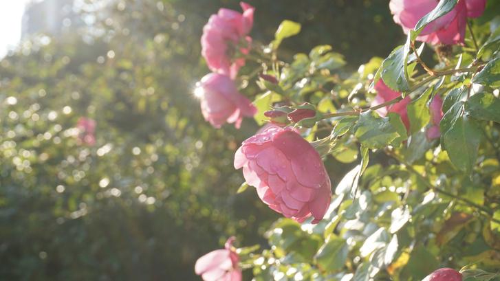 Ароматерапия: запахи, которые взбодрят, успокоят и подарят радость (фото 4)