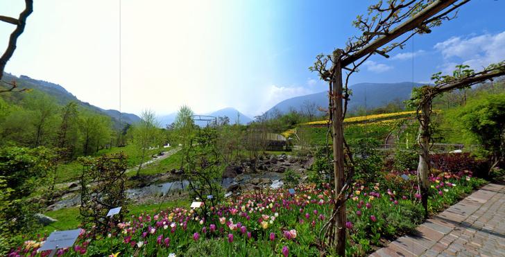 #Лучшедома: 10 виртуальных туров по ботаническим садам (фото 7)