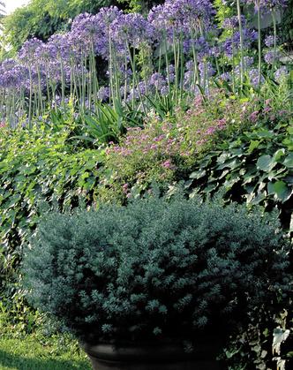 Таинственный  садовник (фото 4.1)