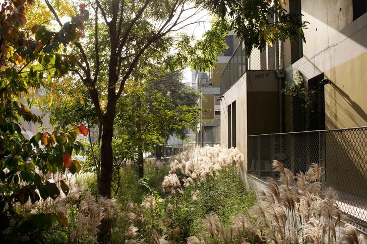 Город-сад: интервью с ландшафтным дизайнером Анри Бава (фото 26)