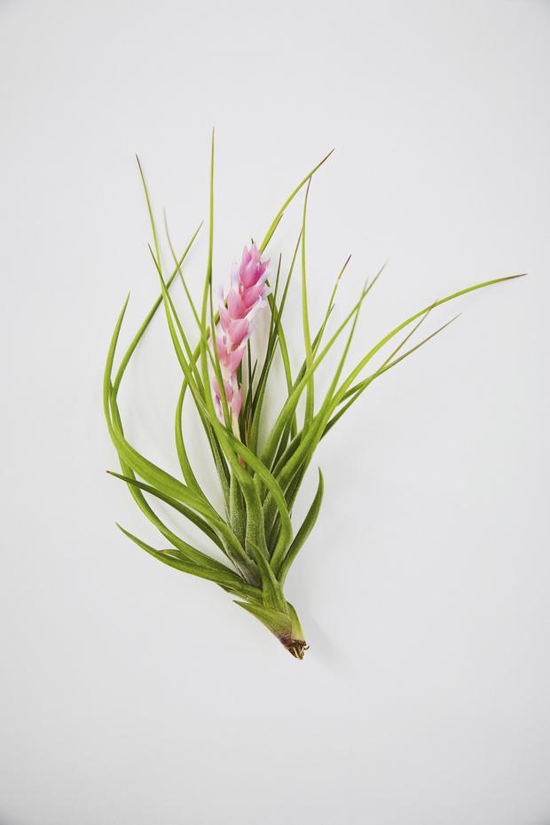 Висячие сады: 10 неприхотливых подвесных растений (фото 3)
