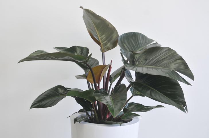 6 растений для рабочего места (фото 4)