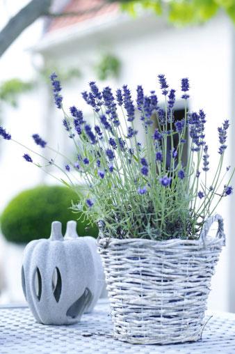 Комнатные цветы в интерьере: модные тенденции 2015 | галерея [5] фото [2]