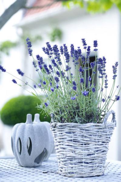 Живые цветы в моде заказать свадебный букет в самаре