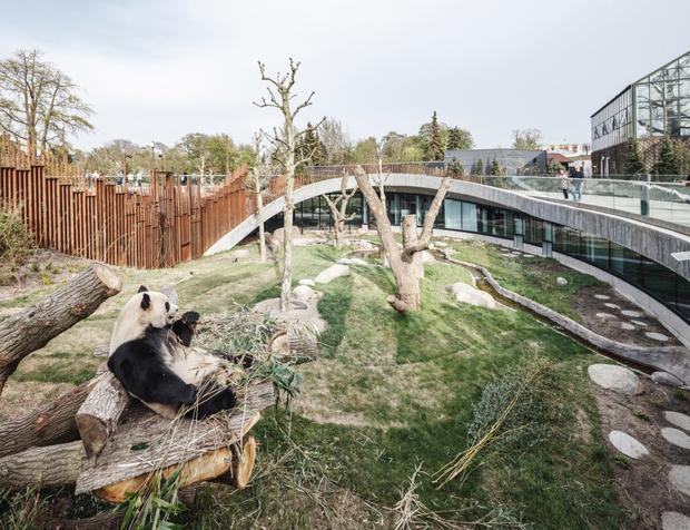 В зоопарке Копенгагена построили дом для панд (фото 14)