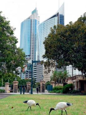 Ботанический сад  не смущает соседство небоскребов