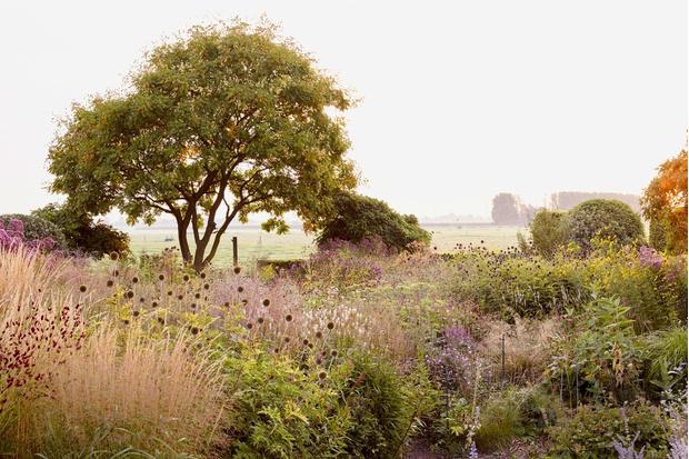 Сад ландшафтного дизайнера Пита Удольфа (фото 15)