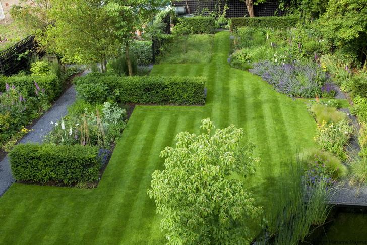 10 самых модных растений для сада (фото 18)