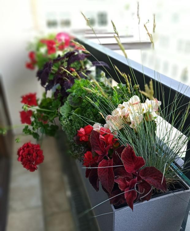 Готовые решения для озеленения балконов и террас (фото 2)