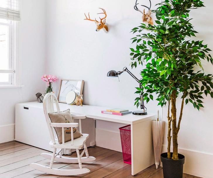 Самые модные комнатные растения 2019 года (фото 17)