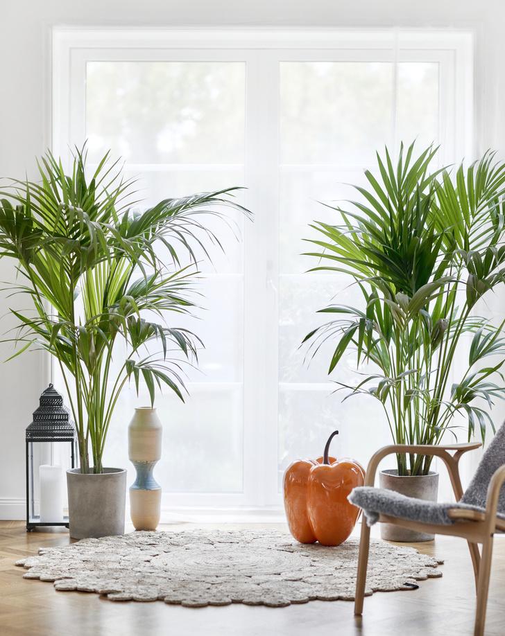 Самые модные комнатные растения 2019 года (фото 9)