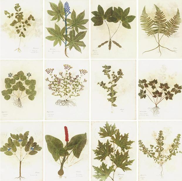 Урок природоведения. Ботанический декор в интерьере (фото 1)