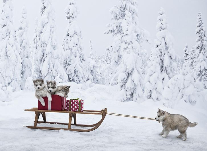 Как нарядить елку в год Собаки