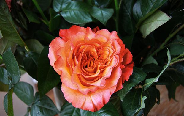 Модный букет: советы флориста 8