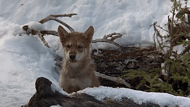 Самые трогательные фильмы о животных (фото 31)