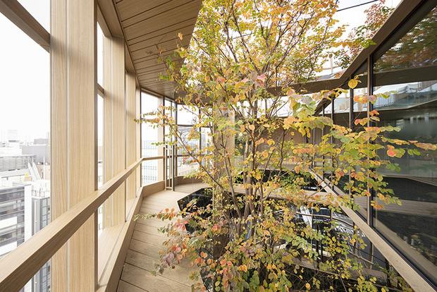 Nendo + Ikawaya Architects: офисное здание в Токио (фото 14)