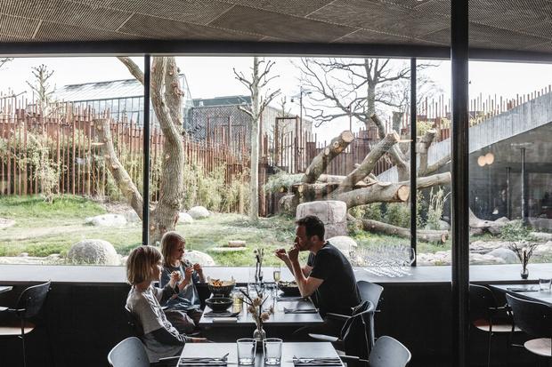 В зоопарке Копенгагена построили дом для панд (фото 0)