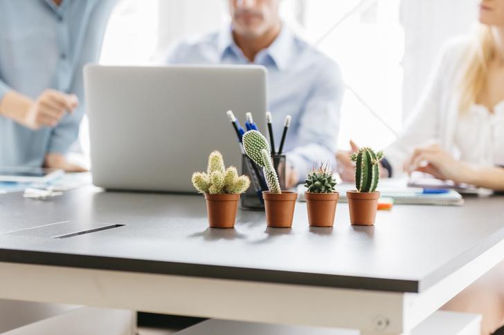 6 растений для рабочего места (фото 9)