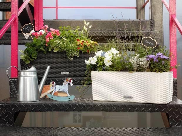 Готовые решения для озеленения балконов и террас (фото 0)