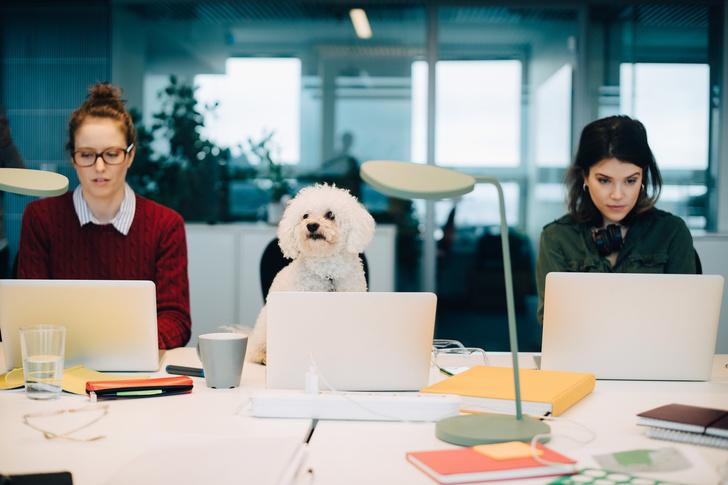 Правила офисного этикета (фото 6)