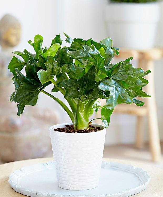 5 растений для ванной комнаты (фото 16)
