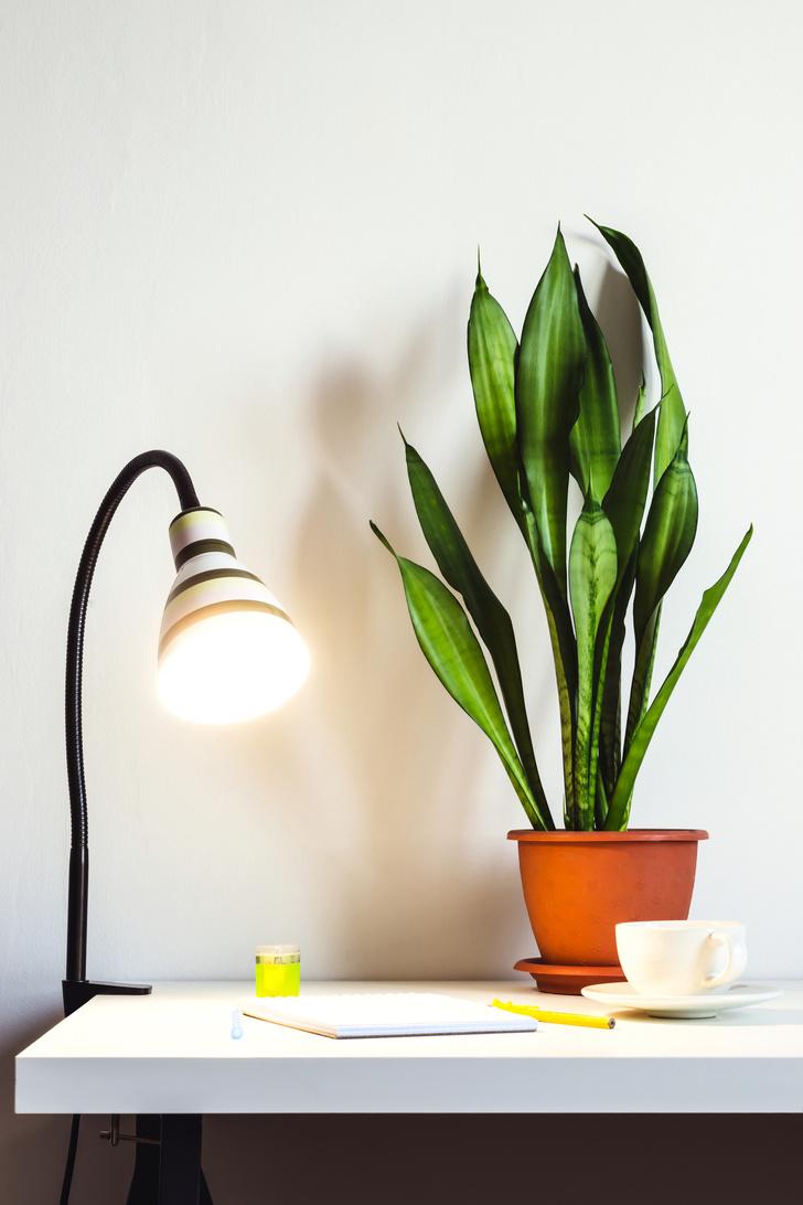 6 растений для рабочего места (фото 13)