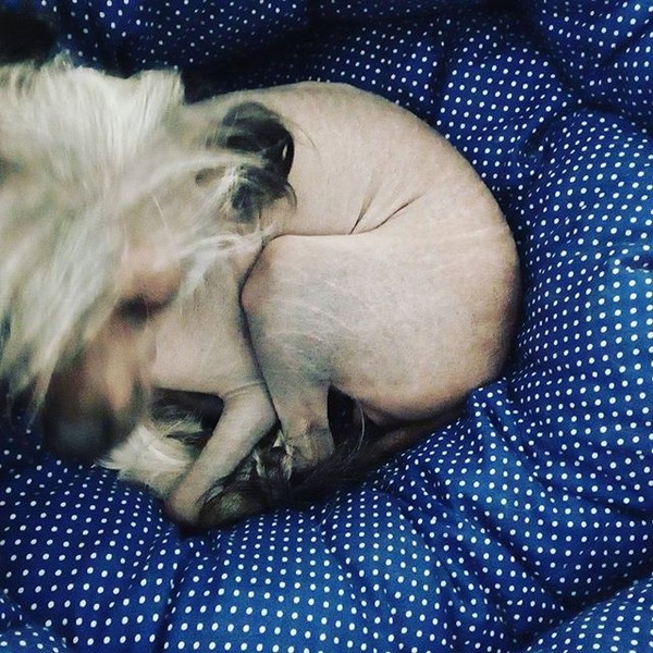 #этиногихотят такой же чистоты!! #elle20philips спасай ))) p.s.на фото моя голая #китайскаяхохлатая #собакалюбака
