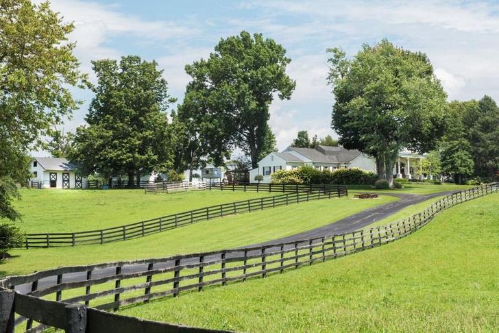 Лошадиная ферма Джонни Деппа в Кентукки будет продана с аукциона фото [2]