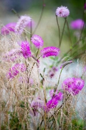 Многая лета: сад трав в Санкт-Петербуре по проекту бюро «Мох» (фото 15.2)