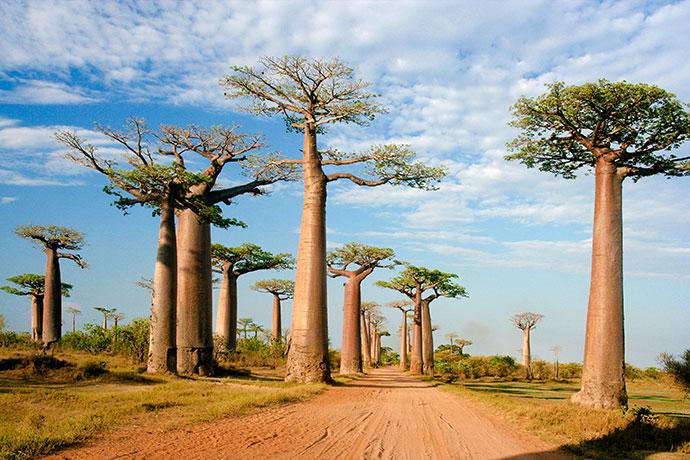 самые красивые деревья мира фото 10