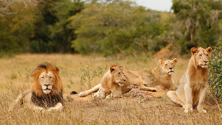 Виртуальные сафари по заповедникам ЮАР (фото 0)