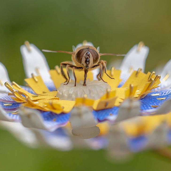 Дизайнерские ульи и домики для насекомых (фото 0)