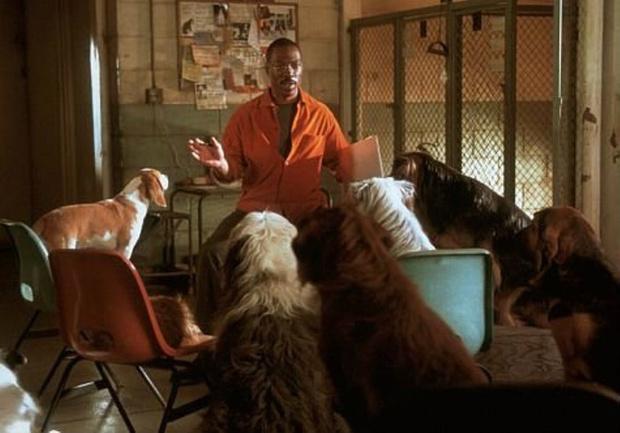 Самые трогательные фильмы о животных (фото 17)