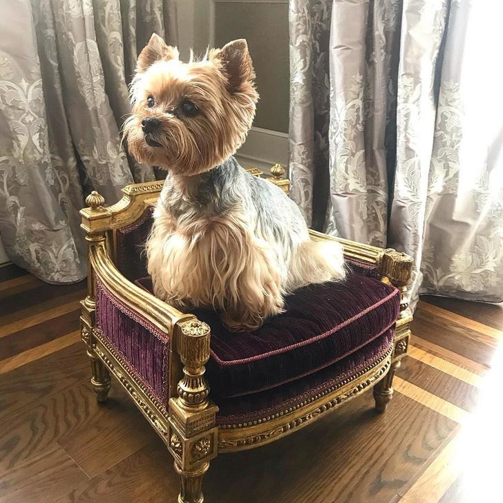 Известные дизайнеры и их собаки (фото 45)