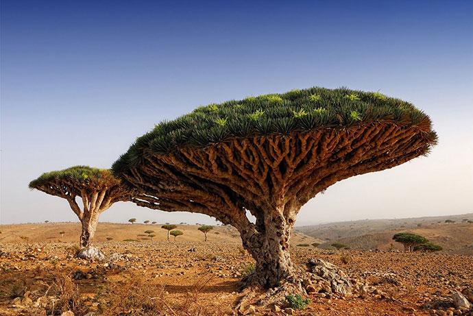 самые красивые деревья мира фото 11