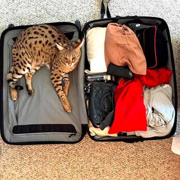 Валентина Зеляева о том, как правильно подготовиться к полету (фото 7)